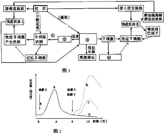 解答: 解:(1)磷脂分子有亲水性的头和疏水尾,因此在水中成两层排列. (2)从图乙可知葡萄糖进入细胞的方式为协助扩散,乳酸进入细胞的方式为主动运输,二者都需要载体蛋白的参与;哺乳动物成熟的红细胞只能进行无氧呼吸,因此当细胞处在无氧环境时,细胞产生的能量没有变化,而协助扩散不需要能量,所以葡萄糖和乳酸的运输都不受影响. (3)根据丙图中的化学反应可知:a是内质网膜,b是高尔基体膜,c是类囊体膜,d是线粒体内膜;与分泌蛋白合成和分泌有关的细胞器是核糖体、内质网、高尔基体和线粒体;叶绿体和线粒体都与能量转换有
