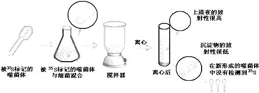 高中生物 题目详情  a,选用噬菌体作为实验材料的原因之一是其成分