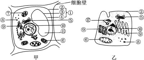 下面甲,乙两图是植物,动物细胞的亚显微结构模式图.请据图回答问题.