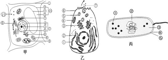 如图是细胞的亚显微结构模式图,请据图回答