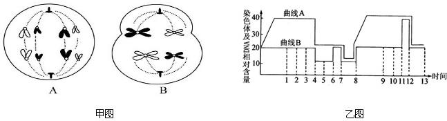 科研人员测得某DNA片段结构如图所示(-代表不同的分子或化学键),已知该片段控制合成的多肽链片段为-甲硫氨酸-脯氨酸-苏氨酸-甘氨酸-缬氨酸-,其密码子分别为:甲硫氨酸(AUG)、脯氨酸(CCU、CCC、CCA)、苏氨酸(ACU、ACC、ACA)、甘氨酸(GGU、GGA、GGG)、缬氨酸(GUU、GUC、GUA、GUG).请根据图回答问题:  (1)ATP中的A与图中A表示的