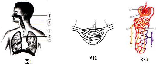 图1,2,3是人体内不同结构示意图,请认真观察后回答