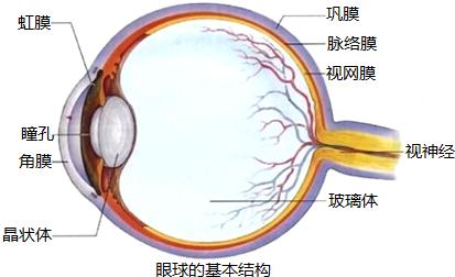 眼的主要部分是眼球,由眼球壁和眼球的内容物构成.眼球的结构如图