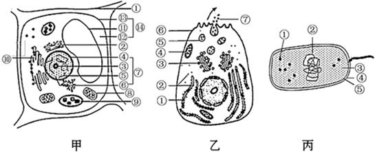 高中生物 题目详情  (1)上图属于真核细胞的是  ,属于原核细胞的是