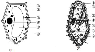 如图,甲为植物细胞模式图,乙为草履虫结构示意图,请据图作答