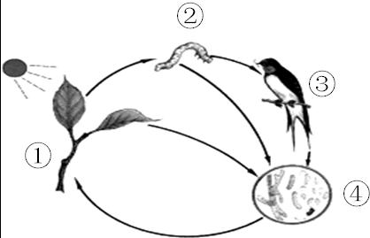 如图是某生态系统简图:根据图回答.