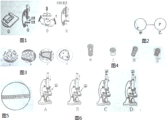 (5)霏霏同学使用显微镜观察洋葱表皮细胞,但镜头(如图4)上的标识模糊