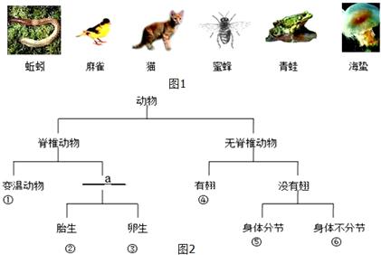 ④   ⑤   (2)在a处应填的特征是:   (3)如果对动物②进行科学分类