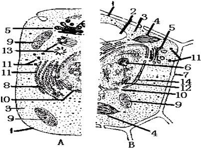 如图是植物细胞亚显微结构模式图,请据图回答