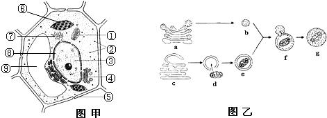 高中生物 题目详情  (1)该细胞与动物细胞相比特有的细胞结构有