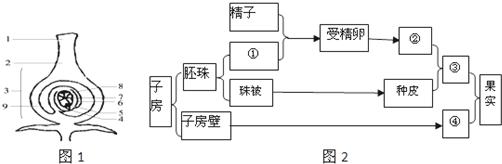 如图表示子房结构和绿色开花植物的果实和种子的形成过程,请据要求