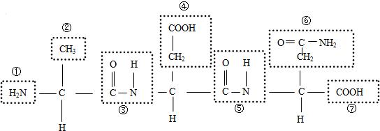 (4)该化合物中肽键的编号是  ,肽键的结构式可表示为  .