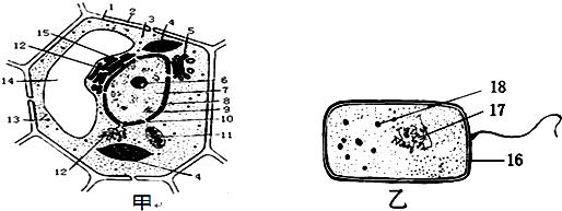 如图是两类细胞的亚显微结构模式图,据图回答