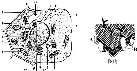 如图表示合在一起的动,植物细胞亚显微结构模式图.据图回答图片