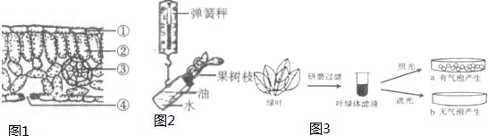 如图是反射弧和眼球的结构模式图,请据图回答