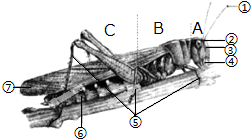 家兔与家鸽相比.下列器官中.属于家兔特有的是 A.心脏B.肺C.气囊D.膈 青夏教育精英家教网