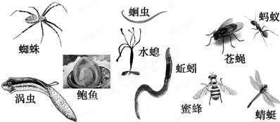 蝉蜕是昆虫的生长发育过程中特有的( )