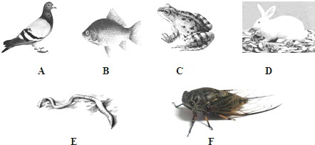 如图是几种常见的动物,据图回答下列问题.