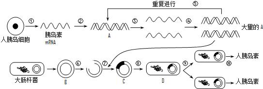 通过pcr技术扩增dna时,过程③所需要的条件是  ,过程④所需要的酶是