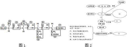 (1)图1结构式中表示氨基的是(填序号)  ,表示羧基的是(填序号)  .