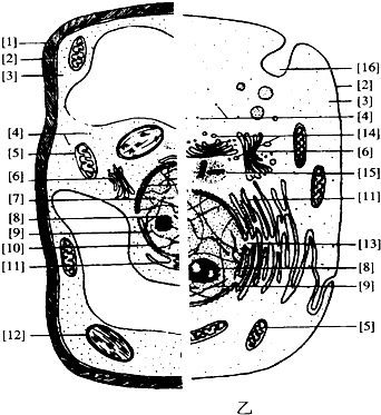 如图甲,乙分别表示高等植物细胞和高等动物细胞的亚显微结构,请据图回