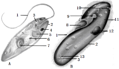根据a眼虫和b草履虫结构示意图,回答问题