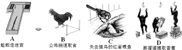 分析下列动物的行为,并回答问题