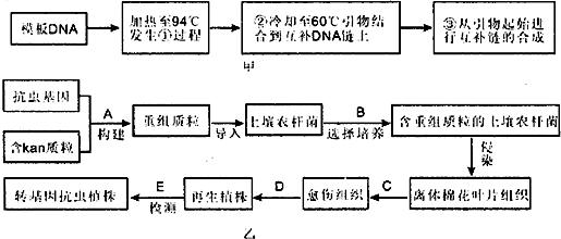 (2)在培育转基因植物的研究中,卡那霉素抗性基因(kan)常作为标记基因