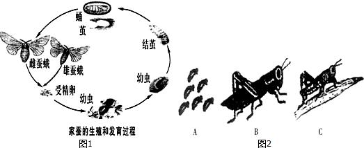 如图为家蚕与蝗虫发育过程示意图,请据图回答下列问题