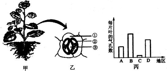 解答:解:(1)被子植物(绿色开花植物)传粉完成后,花粉受到柱头上粘液的刺激后开始萌发,形成花粉管,花粉管通过花柱到达子房伸入胚珠,花粉管里有两个精子,其中的一个与卵细胞融合形成受精卵,另一与极核融合形成受精的极核,这个过程叫做双受精,双受精现象是绿色开花植物所特有的受精现象. (2)气孔是由一对半月形的保卫细胞围成的空腔,它的奇妙之处就是能够自动开闭,气孔的张开和闭合受保卫细胞的控制,保卫细胞含有叶绿体,能够进行光合作用.气孔是植物体蒸腾失水的门户,也是植物体与外界进行气体交换的窗口.图丙表示同一