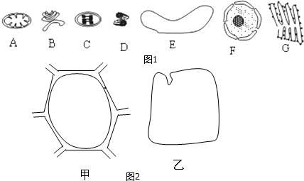 下列关于细胞内膜系统及细胞内部微结构的叙述错误的是( )