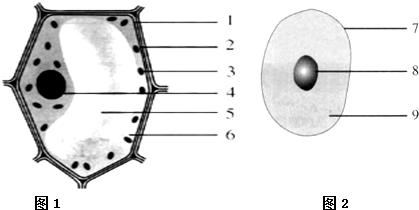 图1,图2是细胞结构模式图,请认真看图并回答