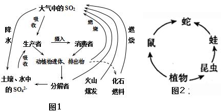 下图表示真核细胞中遗传信息的表达过程,字母表示细胞结构或物质,数字