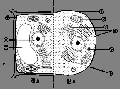 右图为动物细胞和植物细胞部分结构示意图,请据图回答下列问题.