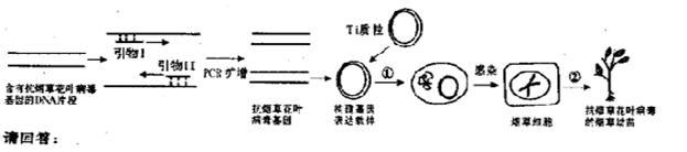以便合成引物i,Ⅱ.
