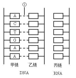 完成下列Ⅰ.Ⅱ小题 Ⅰ.下面是DNA分子的结构模式图.请完成下列问题.①图中10的名称是 ②图中有 个游离磷酸基.③从主链上看.两条单链方向 ,从碱基关系看.两条单链