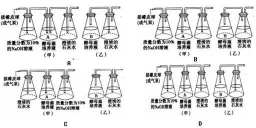 酵母的原理_)该过程表明酵母菌异化作用的特点是   )葡萄酒的酿制原理是:先通气使酵母菌进行   ,以增加酵母菌的数量,然后使酵母菌   如图表示葡萄酒的酿