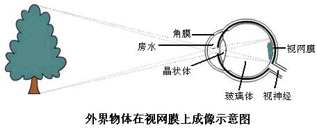 初中生物 题目详情  解:(1)眼球由眼球壁和内容物组成,眼球壁包括外膜