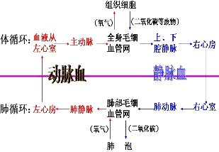 解:血液循环过程中血液成分的变化如图所示图片