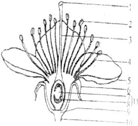 观察如图桃花的结构.回答有关问题 1 桃花的结构中最主要的部分是 . .