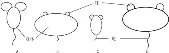 下面是四种不同动物体形的简图.各部分的比例是依据动物原型确定的.图片