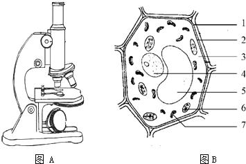 关于植物细胞和动物细胞叙述正确的是