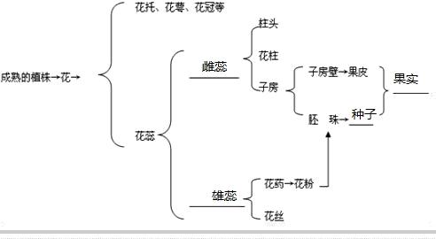 请你用图示法表示花的结构及其与果实形成的关系