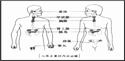 腺+��\y���l9�.����(c9��_如图是人体主要内分泌腺位置的示意图,请根据图回答标号名称