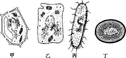 与乙细胞相比,甲细胞中特有的能产生atp的结构是叶绿体 d.
