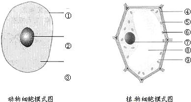 根据动物细胞模式图和植物细胞模式图回答有关问题.图片