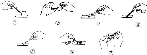 (4)小明用显微镜观察材料时,发现视野中有一污物存在.