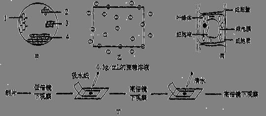 过程是高中生物有关实验下图.其中叙述和操作钠铝方程式高中化学图片