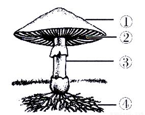 体内射粹�b��.�)�h�_试题答案 在线课程 b 【解析】 试题分析:蘑菇等食用菌都是由菌丝体