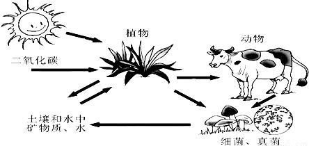 (3)植物和动物死亡后,尸体不会堆积如山,是因为细菌,真菌等分解者能